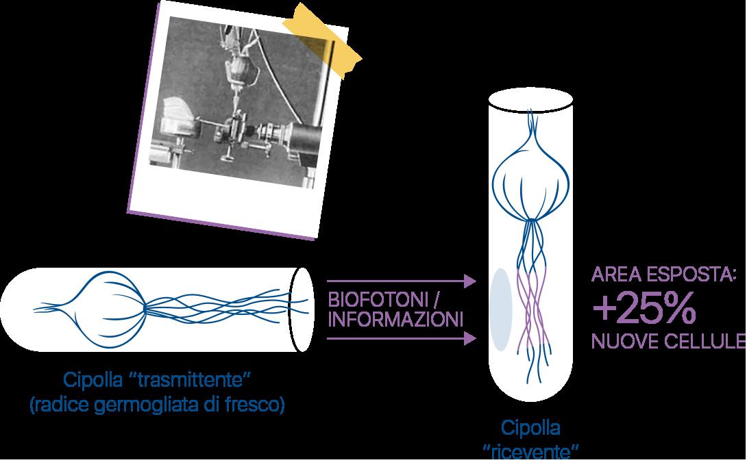 biofotoni-esperimento