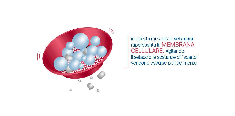I Raggi infrarossi lunghi (FIR) attivano la membrana cellulare