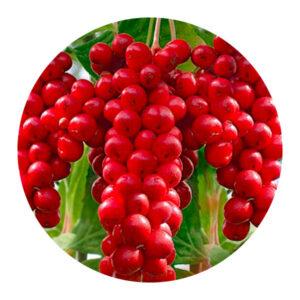 plantari-piante-officinali-Schisandra-meglio-in-salute